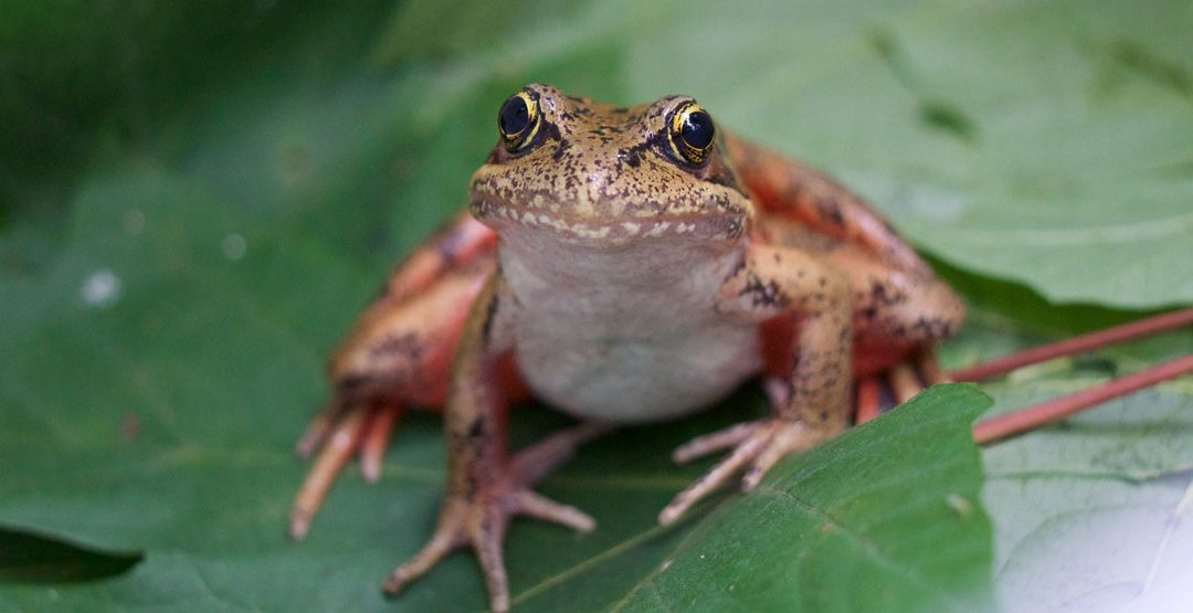 Lessons From Frogs To Make Procrastination Croak